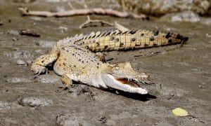 Whitsundays Wildlife Tour